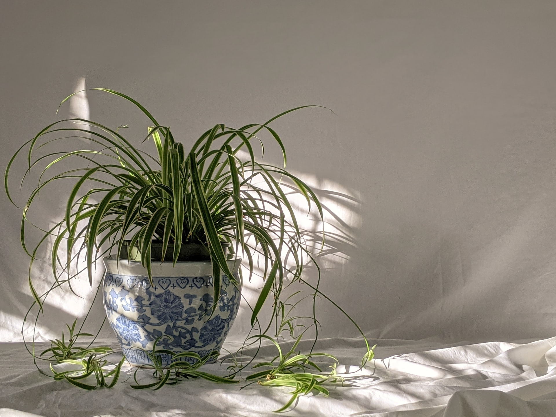 Apartment-Friendly Houseplants to Add to Your Must-Grow List