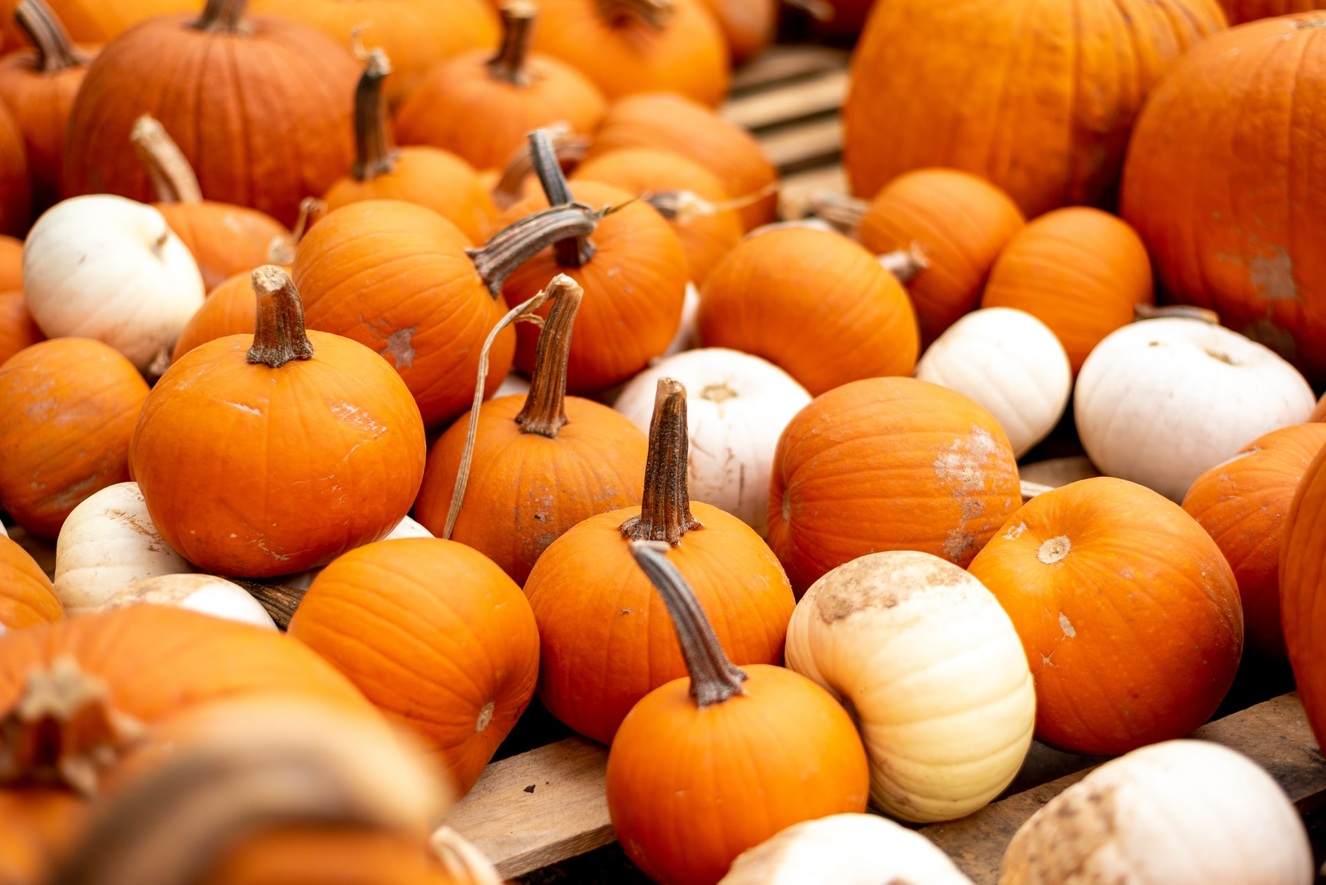 Clever No-Carve Ways to Decorate a Pumpkin at Your Studio Apartment in DC
